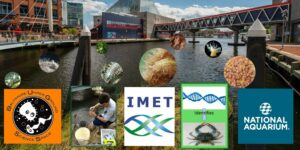 Sequencing the Inner Harbor: A BUGGS/IMET community science collaboration