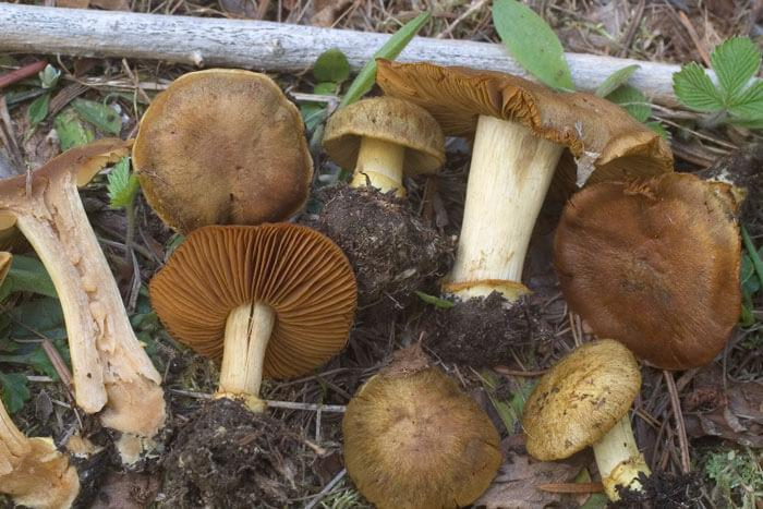 Bring your own sample: Identify fungi using DNA barcoding