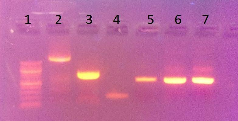 Lab Skills Workshops: How to Cut and Measure DNA