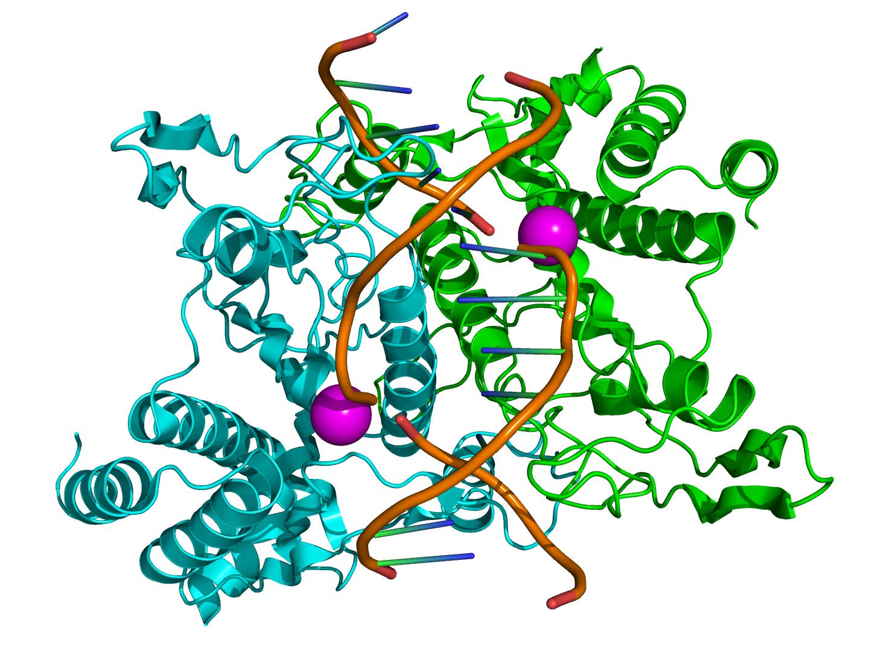 Lab Skills: DNA Scissors