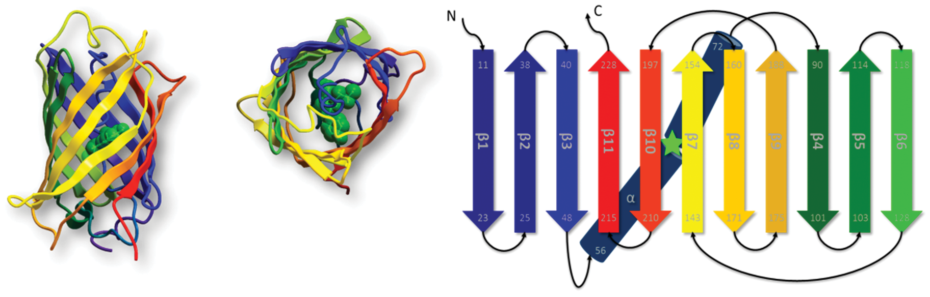 Engineering the Molecular Architecture of Proteins