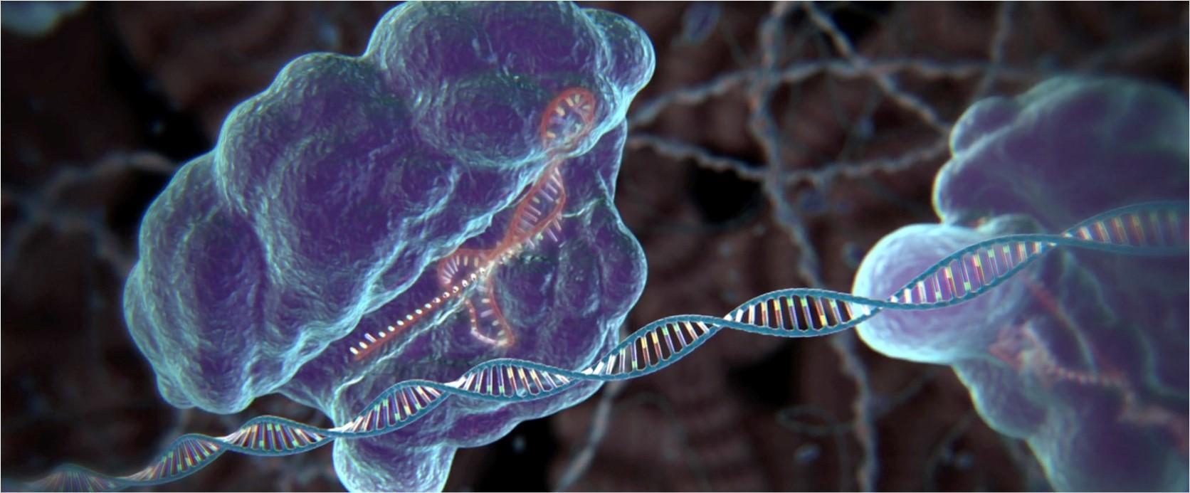 Editing Genomes with CRISPR
